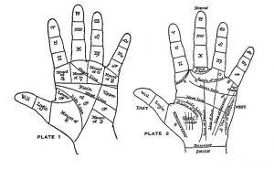 palm2-1